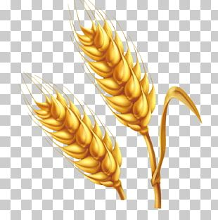Wheat Cartoon Illustration PNG