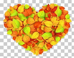 Autumn Leaf Color Heart PNG