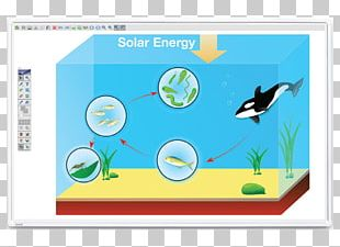 Food Chain Food Web Photosynthesis Ocean Biology PNG