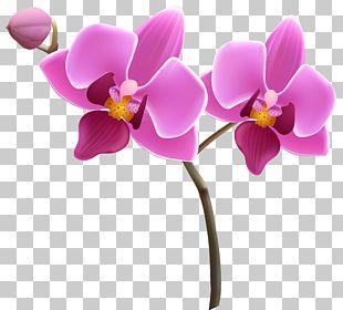 Orchids Purple PNG