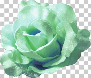 Garden Roses Portable Network Graphics PNG