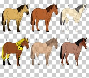 Mustang Pony Stallion Mare Pack Animal PNG